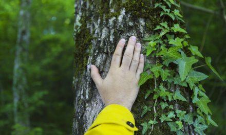 ¿Debemos los cristianos preocuparnos por conservar el medio ambiente y cuidar la creación?